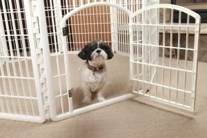 How to Choose the Right Pet Pen